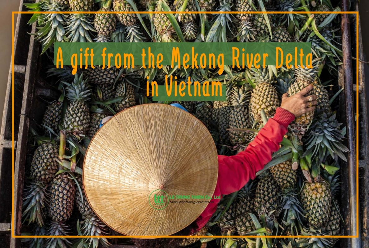 vietnam queen pineapple